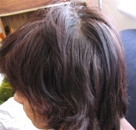 high lighted hair with gray roots using lowlights to grow out gray hair dark brown hairs