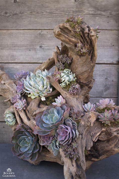 succulent garden ideas 50 best succulent garden ideas for 2018