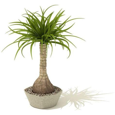 indoor palm indoor palm tree 3d model cgtrader