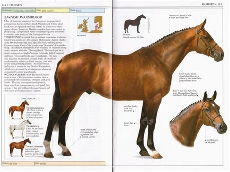 picture books about horses 17 images about razas de caballos on real