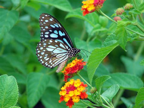 a butterfly alternate pen the butterfly effect