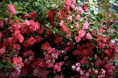 garden flower types flower types of flowers