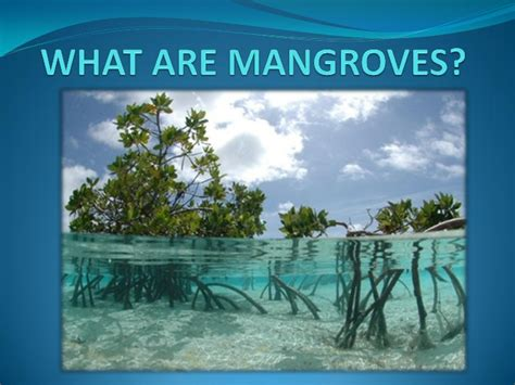 what are what are mangroves