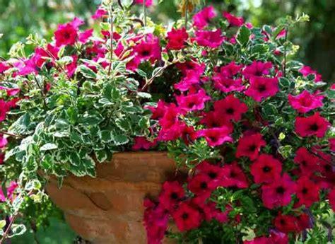 plantes et feuilles pour jardini 232 res estivales