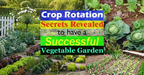 crop rotation home vegetable garden crop rotation how to do it successfully to a