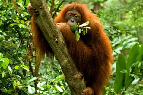 Der Zoologische Garten by Der Zoologische Garten Singapur