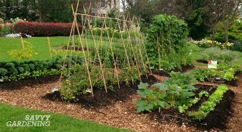 when to plant vegetable garden 6 vegetable gardening tips every new food gardener needs