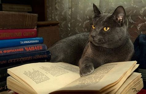 cat picture book cats reading books 18 pics we rule the
