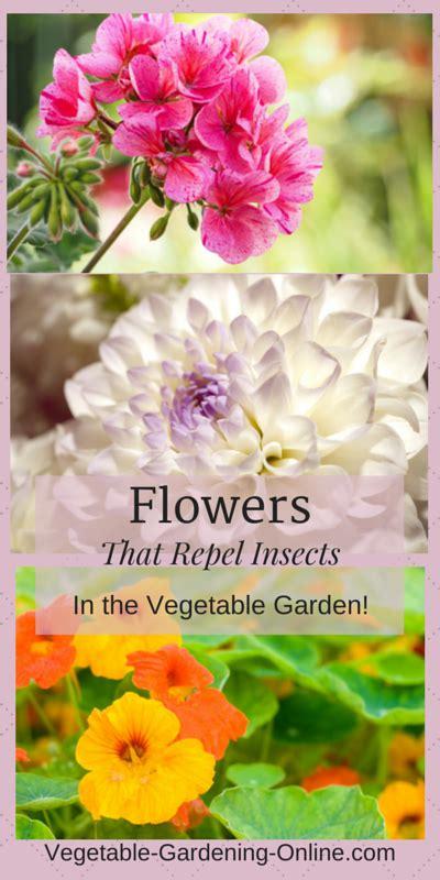 companion flowers for vegetable garden raised bed vegetable garden layout ideas