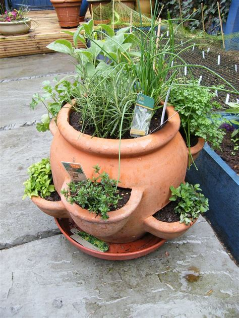 herb pot 25 best ideas about strawberry pots on plant