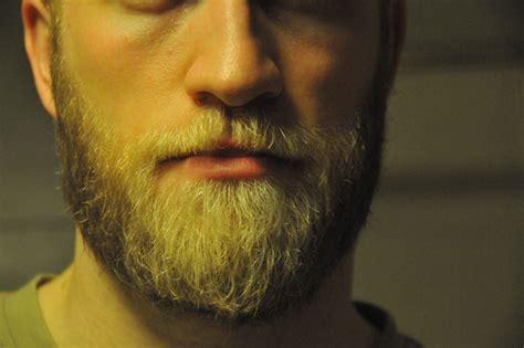 viking beard bearded viking