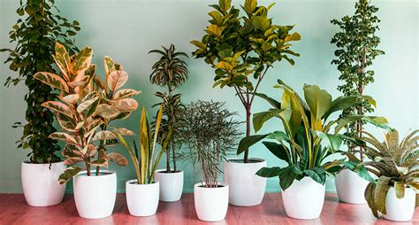 the best indoor plants best indoor plants slucasdesigns