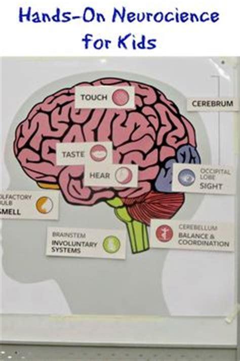 brain craft for human brain craft activities homeschooling