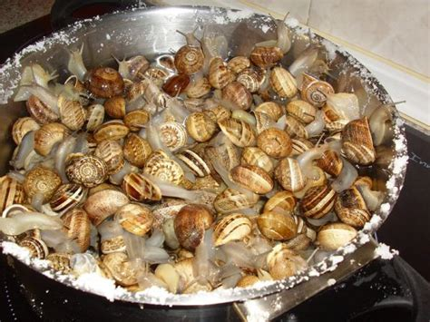 como cocinar los caracoles c 243 mo limpiar y cocinar caracoles