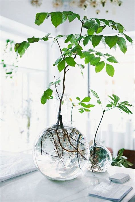 water in vases rooting plants in water in glass vases a interior design