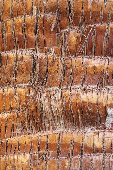 palm woodwork palm tree wood texture stock by riddlesolved on deviantart