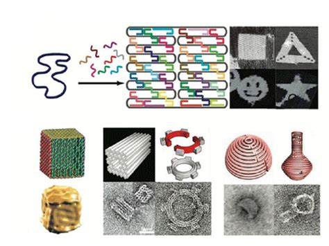 dna origami applications biomod 2014 wiki 2 html openwetware