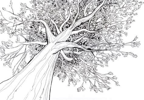 tree drawing how to draw a 3d tree with pencil step by step for
