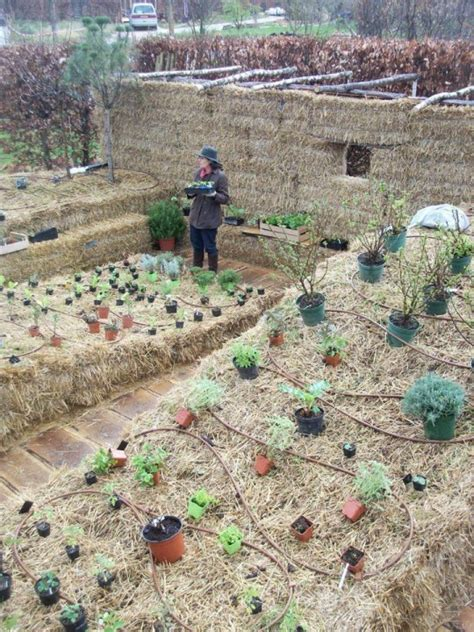SG517 Straw Bale Gardening (Part 3 & Wrap Up)
