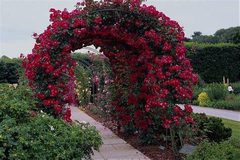 sun shines beautiful flower garden wallpapers