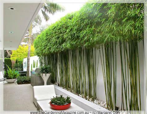 bamboo garden design ideas 25 best ideas about bamboo garden on bamboo