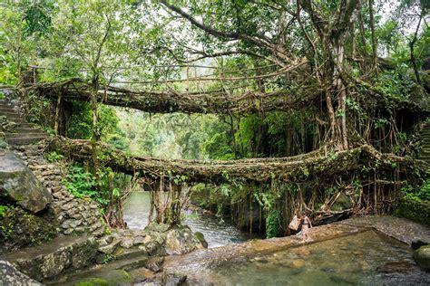 living bridges nongriat and the living root bridges of meghalaya lost