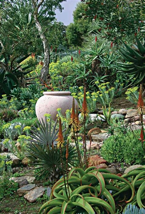 succulents and cactus landscaping best images about