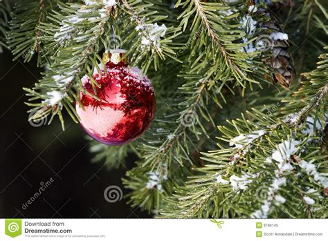 ornament trees ornament on tree royalty free stock photo