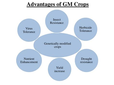 Genetically Modified Definition Crops by Benefits Of Genetically Modified Foods On Environment Food