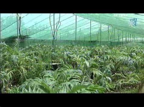 cria de caracoles en casa auge de la cr 237 a de caracoles tierra y mar n 186 935 emisi 243 n