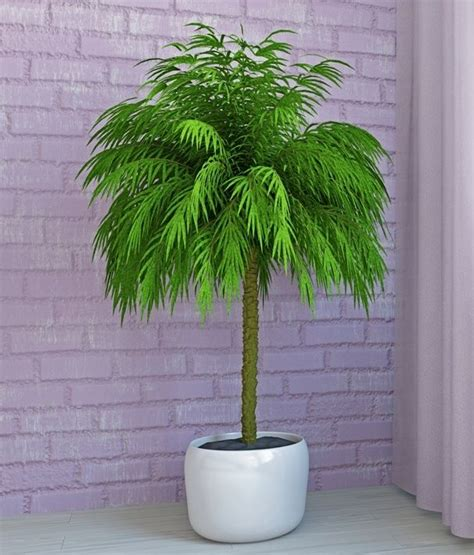 indoor palm 25 best ideas about indoor palm trees on big