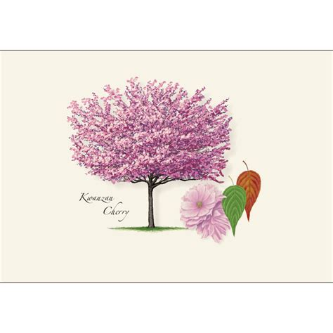 cherry tree notes cherry tree assortment boxed notes earth sky water