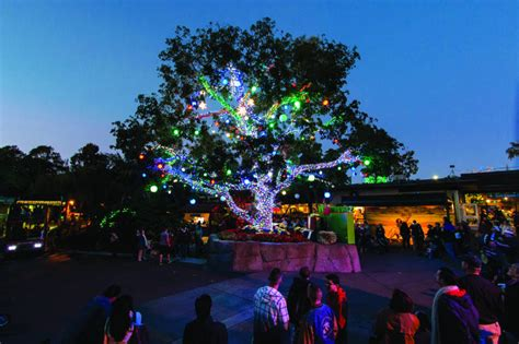 san diego zoo lights things to do in san diego for 2017
