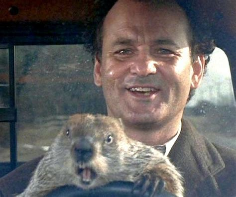 groundhog day best groundhog day the best day of the year