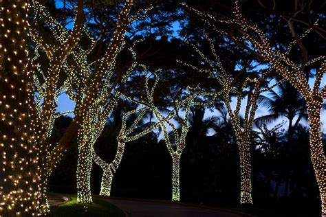 tree lights with different settings light wrapped trees garden ideas