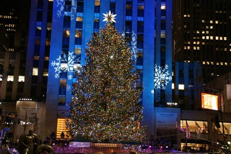 nyc tree where is the tree in new york rainforest