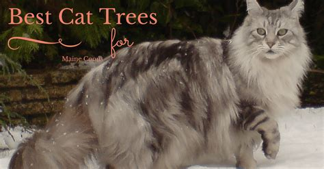 best tree for cats best cat trees for maine coons upgrade your cat