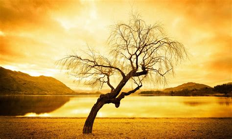 hd tree wallpaper abstract tree hd wallpapers hd wallpapers high