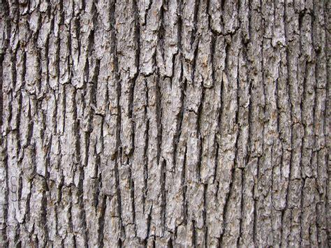 oak tree woodworking free wood texture oak tree bark