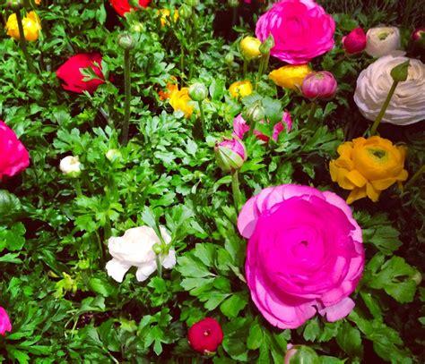 secret garden flowers secret flower garden flowers