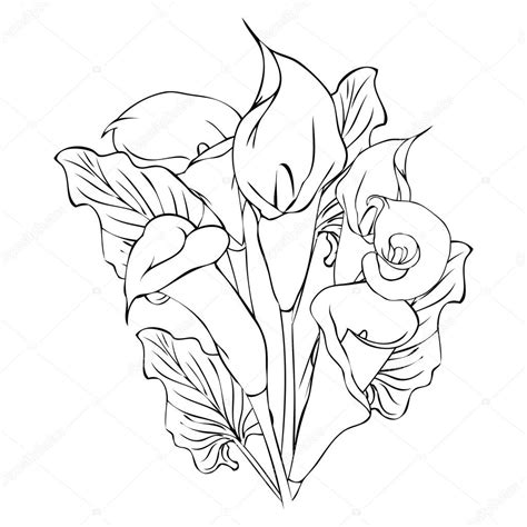 calla rubber st calla drawing outline www imgkid the image