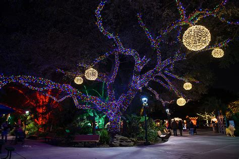 park zoo lights houston zoo zoo lights
