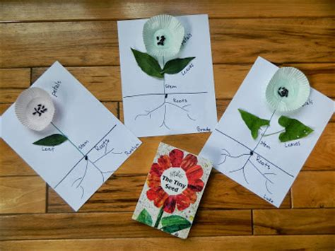 plant crafts for exploring plants with ted s