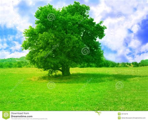 tree pic green tree royalty free stock images image 2514279