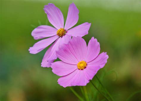 light flowers light purple flowers by edward myers