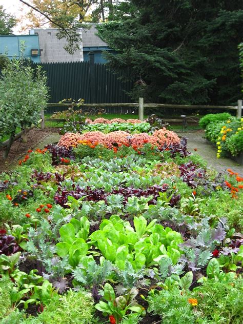 garden vegetable lawn or vegetable garden gardening