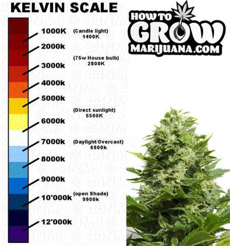 what to do with lights led grow lights an ultimate guide for indoor growers