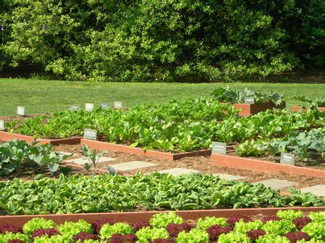 vegetable garden design ideas triyae backyard vegetable garden design ideas