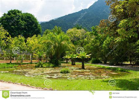 botanical garden de janeiro botanical garden in de janeiro royalty free stock