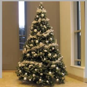 real trees liverpool office plants rental manchester leeds liverpool